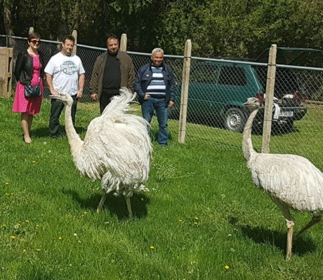 Две птици нанду са новите обитатели на Зоокът Павликени